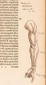 Galen, Omnia Cl. Galeni Pergameni summi in arte medica viri opera... Tomus primus... [-secundus] (Basle: Hieronymus Froben and Nicolaus Bischoff, 1542)