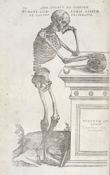 De humani corporis fabrica, 1555, signature s6 verso, skeleton image (Medical pre-1701 Collection 2500a)