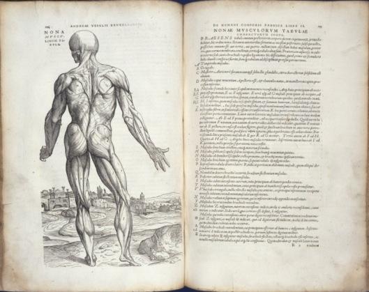 De humani corporis fabrica, 1543, signatures R1 verso-R2 recto, muscle man (R51228)