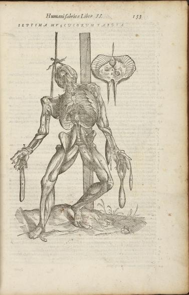 Andreas Vesalius, Anatomia (Venice, 1604), p. 153. Pre-1701 Medical Printed Collection, 2498.