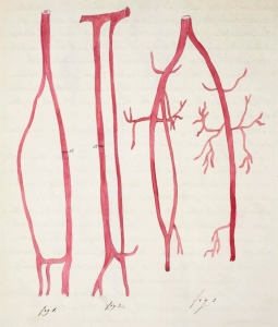 John Hatton blood vessels